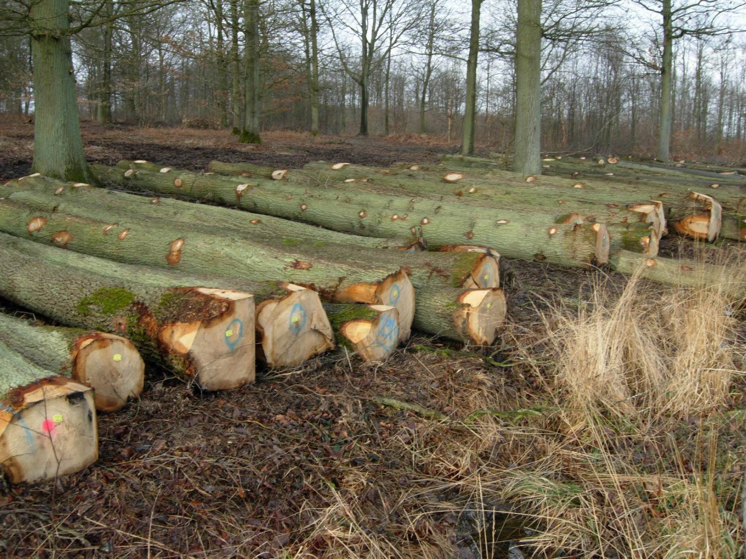 Stamhout/Rondhout | Blessing Timbers, Huizen, t Gooi